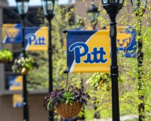 a row of pitt banner on lamp posts
